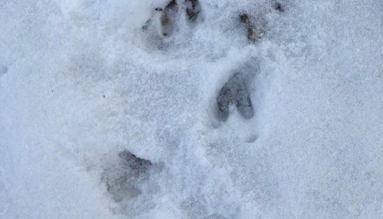 Meklējam pēdas sniegā